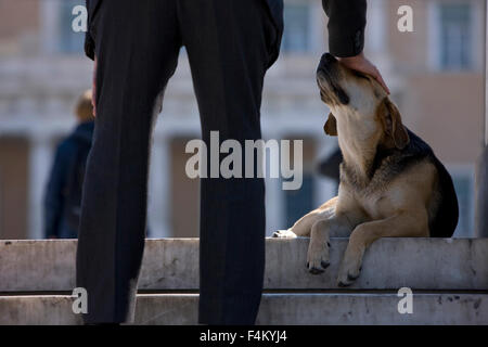 Closeup of mans legs and hand patting / showing affection to a stray dog sitting on the ground of Syntagma sq., - Stock Photo