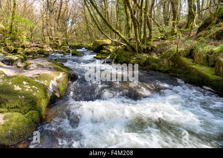 Fast flowing water as the River Fowey cascades through Golitha Falls on the southern edge of Bodmin Moor in Cornwall - Stock Photo