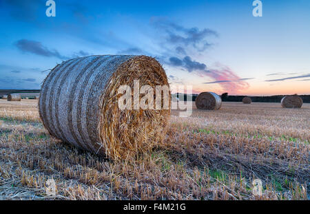 Hay bales at sunset in a field near Padstow in Cornwall - Stock Photo