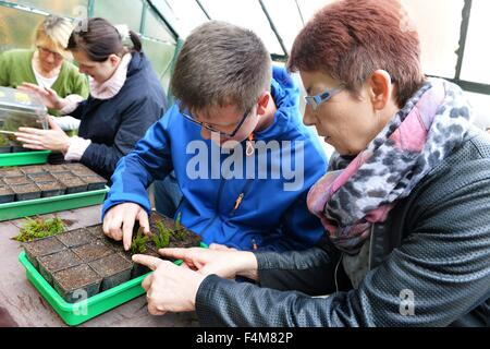 Handicapped  man Christoph Schmidt (second from right) works together with a non handicapped woman in a garden, - Stock Photo