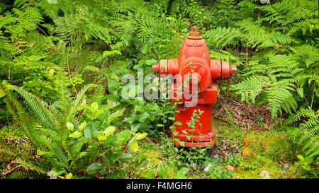 Bright red fire hydrant surrounded by lush green ferns in the Pacific Northwest - Stock Photo
