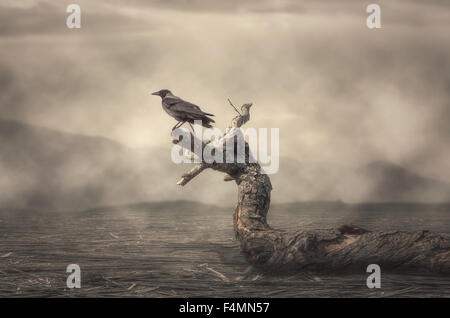 The crow perching on tree in misty weather - Stock Photo