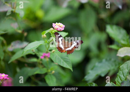 Butterfly in Georgetown, Malaysia - Stock Photo