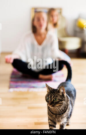 Tabby in front of female friends doing yoga on floor at home - Stock Photo