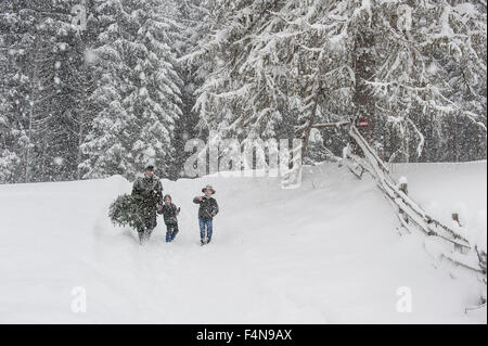 Austria, Altenmarkt-Zauchensee, father with two sons carrying Christmas tree in winter landscape - Stock Photo