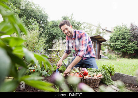 Man gardening in vegetable patch - Stock Photo