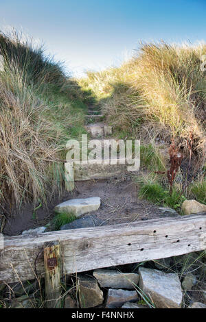 Wooden steps in sand dunes. Northumberland. UK - Stock Photo