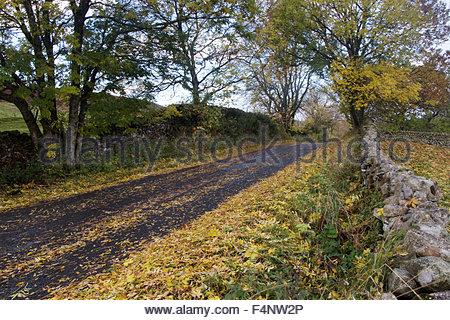 Middleton-in-Teesdale, Barnard Castle, Co Durham, UK 21st October 2015 After the overnight strong winds and rain - Stock Photo