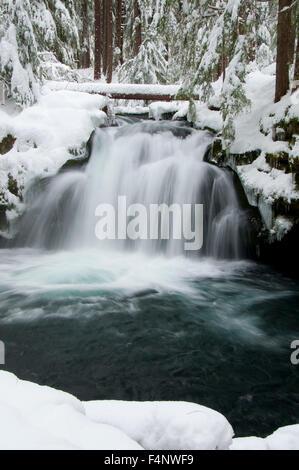 Whitehorse Falls, Rogue-Umpqua National Scenic Byway, Umpqua National Forest, Oregon - Stock Photo