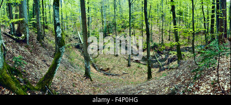 Primeval beech forest on borders between Slovakia and Ukraine in eastern Europe - Stock Photo