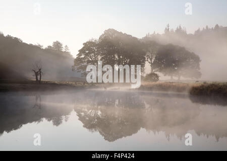 A copse of deciduous trees near Elterwater in a foggy Langdale Valley - Stock Photo