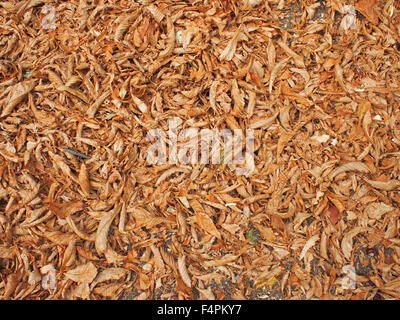 The surface of the ground in the park, completely covered with fallen leaves of chestnut brown color to use as a - Stock Photo