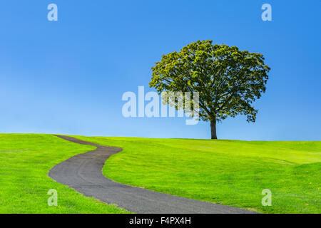 Lone tree on a green meadow under a clear blue summer sky - Stock Photo