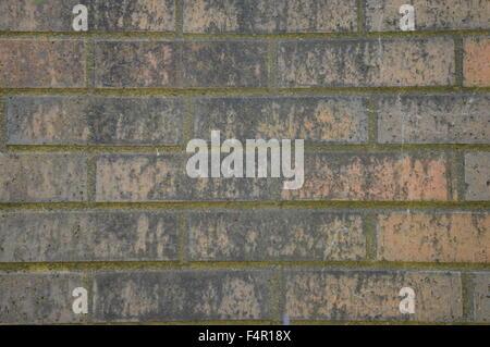 dark moss growing on old bricks - Stock Photo