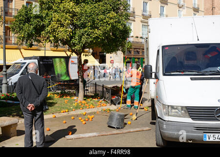 Municipal worker harvesting oranges in the Plaza de la Reina in the old city of Valencia, Spain. People in background - Stock Photo