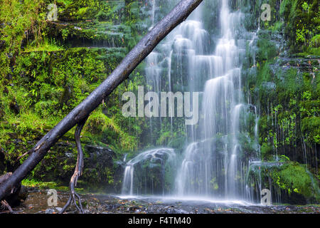 Erskine Falls, Australia, Victoria, Great Otway, national park, waterfall - Stock Photo
