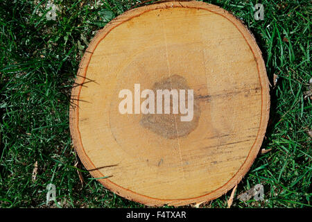 A cross section of a tree showing growth rings on the wood inside - Stock Photo