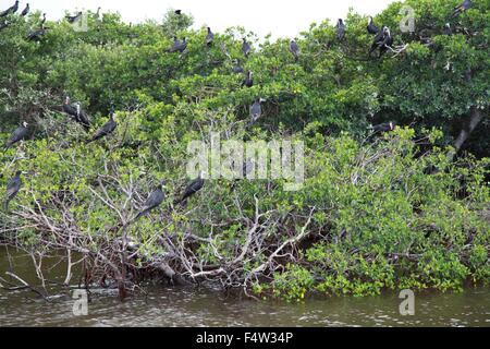 Sanibel, Florida, USA. 9th Aug, 2013. Tourists enjoy a bird watching and dolphin spotting boat tour among mangroves - Stock Photo