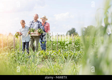 Grandparents and grandson harvesting vegetables in sunny garden - Stock Photo