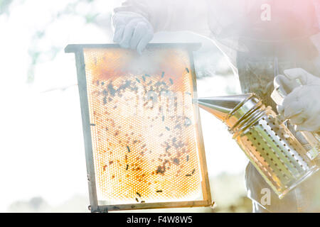 Beekeeper using smoker to calm bees on honeycomb - Stock Photo
