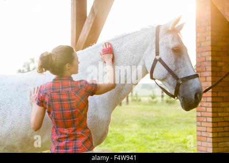 Woman brushing horse - Stock Photo