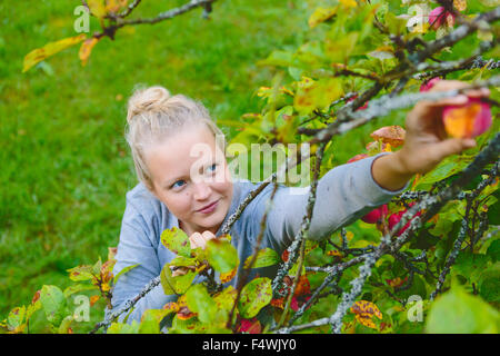Finland, Uusimaa, Sipoo, Woman reaching for apple on branch - Stock Photo