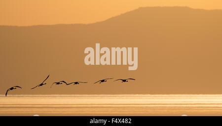 Lesser flamingos flying above Lake Natron, Tanzania - Stock Photo