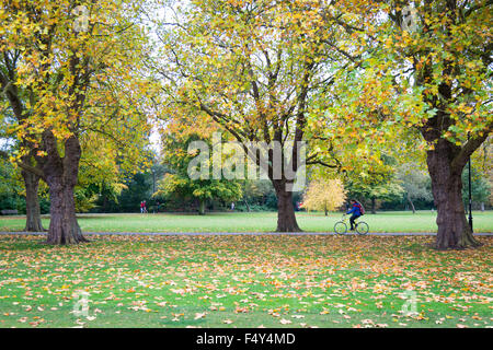 Cambridge, UK. 24th October, 2015. Vibrant autumn colours brighten an overcast day in Cambridge. The avenue of trees - Stock Photo