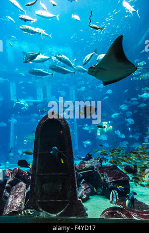 Photo of a tropical fish on a coral reef in Dubai aquarium - Stock Photo