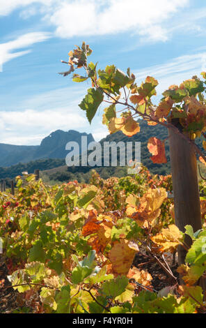 Autumn in the Vallée de l'Agly, an AOC wine growing area near Perpignan, France - Stock Photo