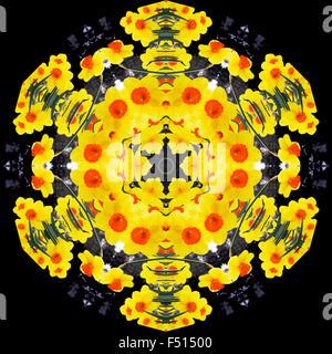 A kaleidoscopic image of daffodils - Stock Photo