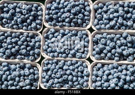 Blueberries in paperback boxes are offered for sale at the weekly market aside the river Elbe - Stock Photo
