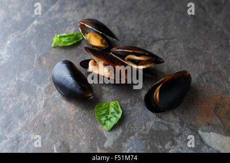 raw black mussels, food ingredients - Stock Photo