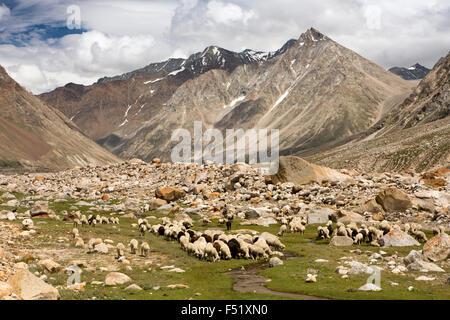 India, Himachal Pradesh, Lahaul Valley, Batal, sheep and goats grazing beside Spiti road to Kunzum La Pass - Stock Photo