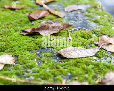 Autumn leaf on green moss. - Stock Photo