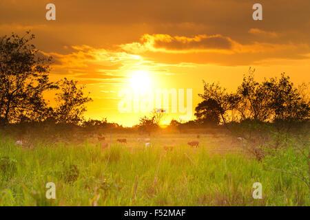 Sunset Over Esmeralda Province In Northern Ecuador - Stock Photo