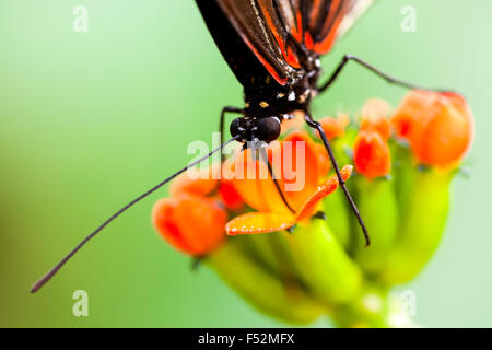 Exotic Butterfly Feeding On A Colorful Flower Shot With Ambient Lights In Amazon Forest - Stock Photo