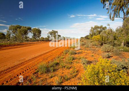 Long red sandy road slicing through Australian outback landscape with trees & golden wildflowers to distance horizon - Stock Photo