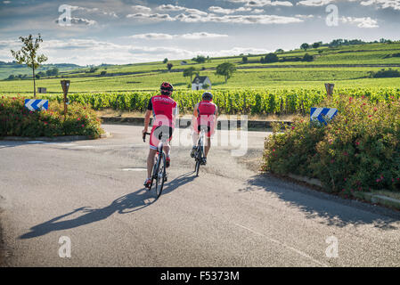 Bike tour in the vineyards near Beaune, Cote d'Or, France, Europe - Stock Photo