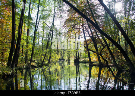 Autumn coloured trees are reflected in the water of the Schlaube river in the Schlaube Valley Nature Park not far - Stock Photo