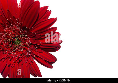 Red gerbera flower isolated on white background - Stock Photo