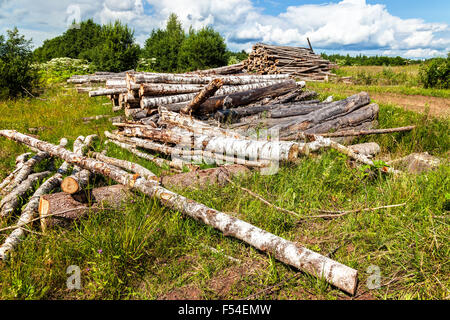 Cut tree logs piled up near a forest road in summertime - Stock Photo