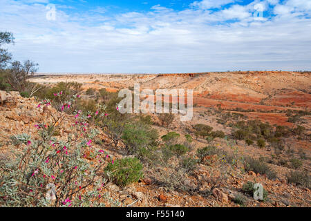 Stunning Australian outback landscape from hilltop lookout, deep valley hemmed by stony red barren hills, wildflowers - Stock Photo