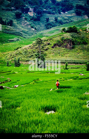 A boy walks through the terraced paddy fields of the Muong Hoa Valley, Lào Cai Provence, North West Vietnam. - Stock Photo