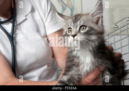 Midsection of vet holding cat in clinic - Stock Photo