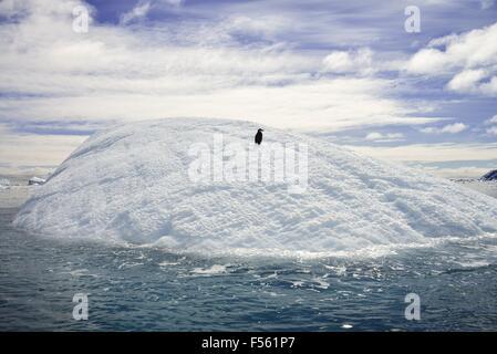 A single penguin resting on an iceberg! - Stock Photo