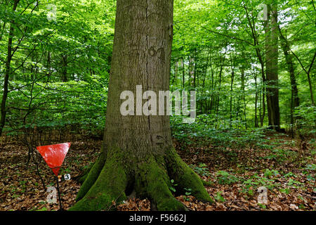 26.06.2015, Below, Brandenburg, Germany - Memorial Death March in the Below Forest near Wittstock at the Dosse. - Stock Photo