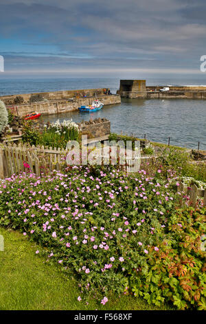 Craster; Harbour Northumberland; UK - Stock Photo