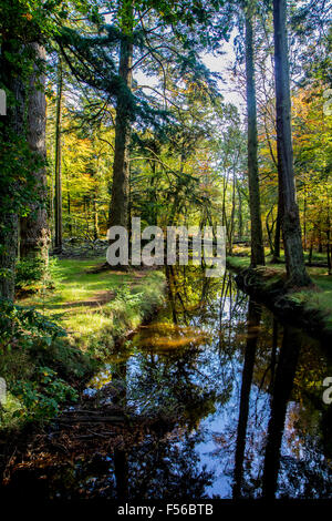 Autumn in the New Forest Hampshire - Stock Photo