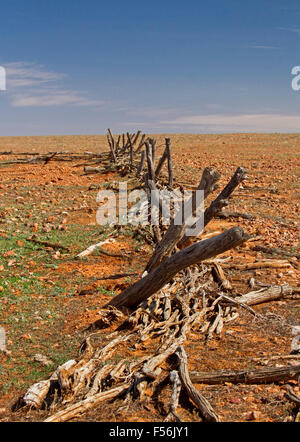 Remains of derelict timber stock yards on barren stony outback plains that stretch to horizon under blue sky, during - Stock Photo